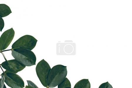 Image-id B167650880
