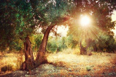Фон, Вид, дизайн, искусство, Солнце, на открытом воздухе - B29985369