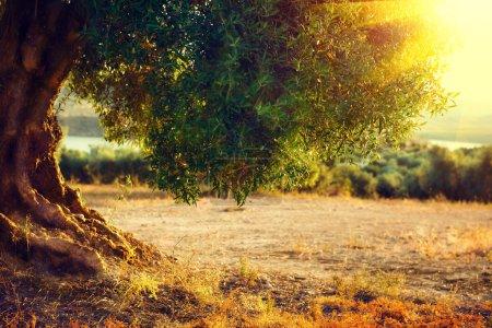 Фон, Вид, Ональ, Солнце, на открытом воздухе, поле - B90103166
