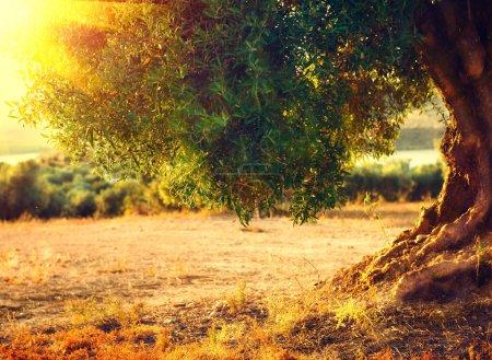 Фон, Вид, Ональ, Солнце, на открытом воздухе, поле - B90103660